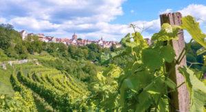 Weinberge vor Rothenburg ob der Tauber