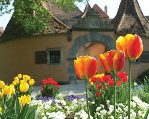 Frühling im Burggarten